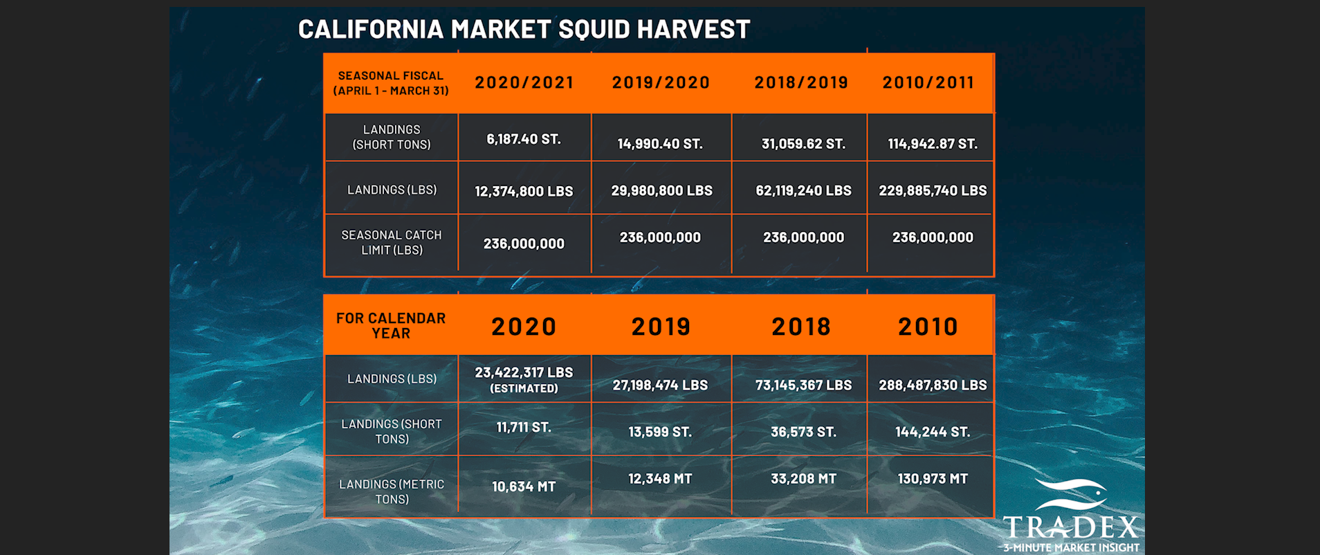 Current Market Squid Landings