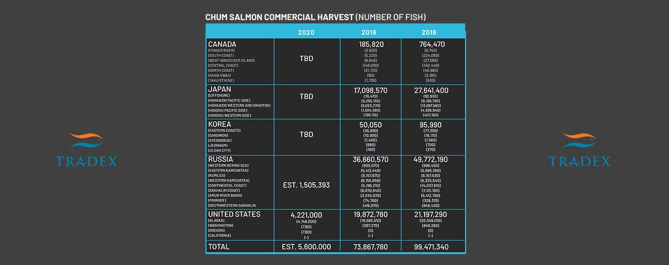 Global Chum Salmon Harvest